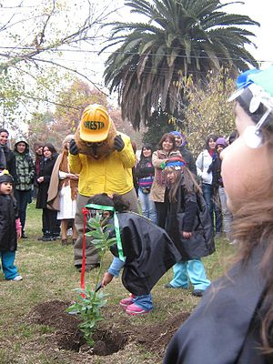 National Forest Corporation (Chile) -  Forestin and kindergarten kids