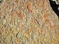 Fossiliferous sandstone (Vinton Member, Logan Formation, Lower Mississippian; Route 16 roadcut northeast of Frazeysburg, Ohio, USA) 3 (40601538912).jpg
