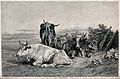 Four cows resting in a field. Etching by Beyer after R. Bonh Wellcome V0021643.jpg