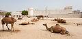 Fuerte Al Koot, Doha, Catar, 2013-08-06, DD 04.JPG