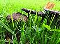 Fungi (30375508475).jpg