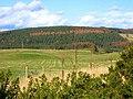 Gairnlea Wood - geograph.org.uk - 379260.jpg
