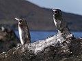 Galápagos Inseln, Ecuador (13899347022).jpg