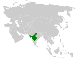 Galerida deva distribution map.png