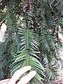 Gardenology.org-IMG 1377 rbgs10dec.jpg