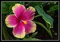 Gardens by the Marina Bay - Dome Flowers-10 (8323787804).jpg