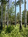 General Crook Trail, Payson, AZ 85541, USA - panoramio (4).jpg