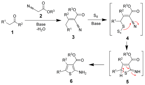 The mechanism of the Gewald reaction
