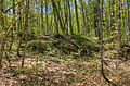 Gfp-michigan-porcupine-mountains-state-park-forest-trees.jpg