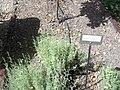 Giardino botanico di Brera (Milan) 309.jpg