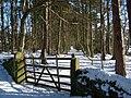 Glade in plantation below Keenley Wesleyan Chapel - geograph.org.uk - 1159934.jpg