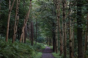 English: Glenarm forest. Glenarm forest covers...