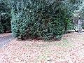 Grab Gustav Dahrendorf FriedhofOhlsdorf (1).jpg