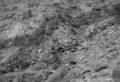 Grand Canyon 1956 Crash Site NHL.png