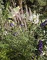 Grasses (3830458368).jpg