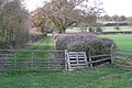 Grassy track between fields west of Bannerhill Farm - geograph.org.uk - 1589352.jpg