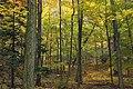 Gravel Family Nature Preserve (11) (30290626731).jpg