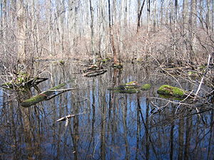 Great Swamp National Wildlife Refuge - Image: Great Swamp National Wildlife Refuge New Jersey 02