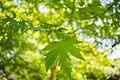 Green Leaves Warming.jpg