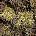 Green sand in lava rocks.jpg