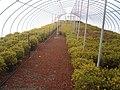 Greenhouse 8.JPG