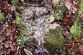 Grenchen - Tuffstein im Bachbett bei der alten Tuffgrube.jpg
