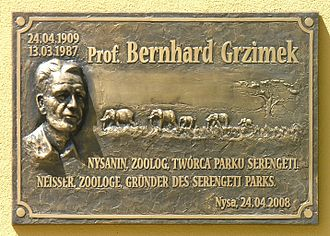 Bernhard Grzimek - The plaque for Bernhard Grzimek in Nysa