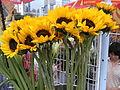 HK CWB Victoria Park Chinese New Year Flower Fair 09 Sunflowers.jpg