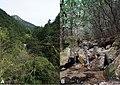 Habitats of Megophrys baishanzuensis sp. nov.jpg
