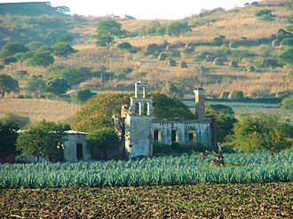 Agriculture in Mexico - Agave plants and a ruined hacienda house in Jalisco