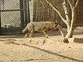 Hai Bar Yotvata Nature Reserve 16.jpg