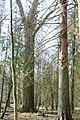 Hajnówka, Poland - panoramio (213).jpg