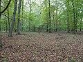 Hambach forest 03.jpg