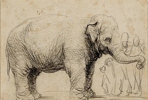 Hansken - A sketch of Hansken by Rembrandt (1637).