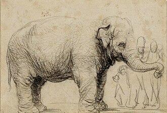 https://upload.wikimedia.org/wikipedia/commons/thumb/3/30/Hansken.rembrandt.jpg/330px-Hansken.rembrandt.jpg