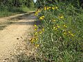 Hatchie Natl Wildlife Refuge 038.jpg