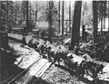 Hauling logs with team of oxen, crossing railroad tracks; location unknown (CURTIS 711).jpeg