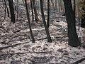 Hayman Fire (4).jpg