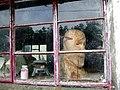 Head in window - geograph.org.uk - 465637.jpg
