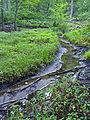 Headwaters of Saw Mill River, Chappaqua, NY.jpg