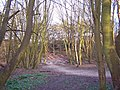 Heath Wood - geograph.org.uk - 731321.jpg
