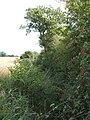 Hedgerow and hidden stream - geograph.org.uk - 225657.jpg