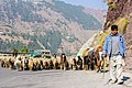 Herder on Karakorams.jpg