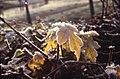 Herfst Houtwijk 1.jpg