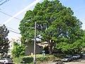 Heritage Tree Park & Corbett Oak.jpg