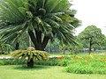 Hermosa vegetacion - panoramio.jpg