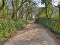 Higher Tregenna Road, St Ives, March 2021 (1).jpg