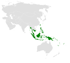 Hirundo tahitica distribution map.png