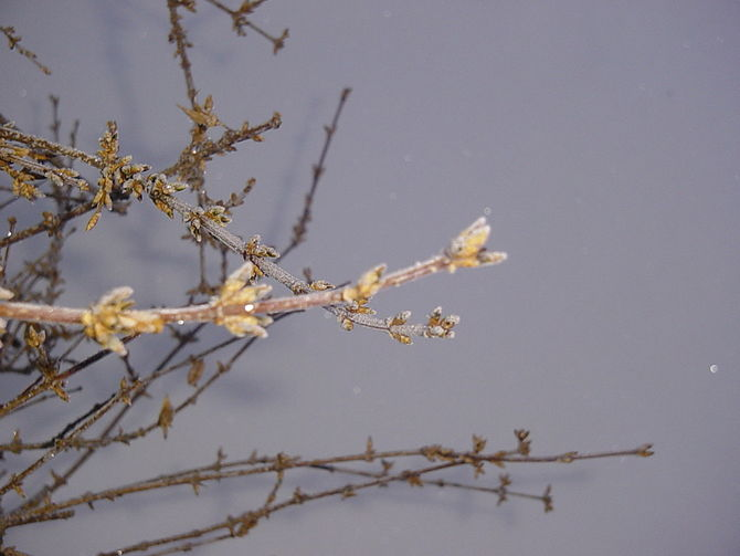 English: Hoar frost on plants on a very cold w...