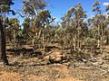 Holland Track through bushland near Badgebup.jpg